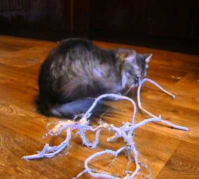 Кіт гризе зарядку